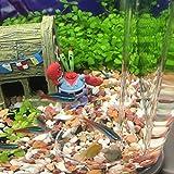 Senzeal Aquarium Clear Glass Feeder Tube Fish