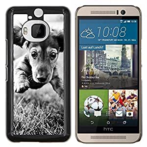Cubierta protectora del caso de Shell Plástico || HTC One M9+ M9 Plus || Dachshund Doxie del perro de perrito Negro Blanco @XPTECH