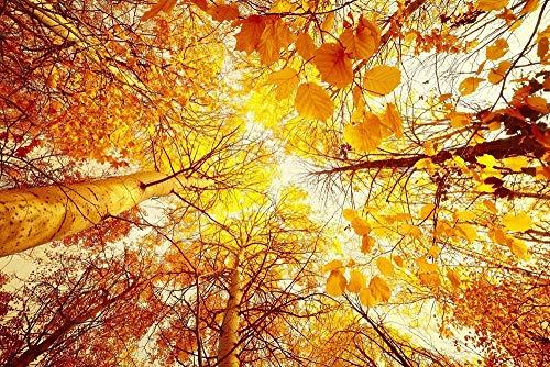 Hestian Home Decor 5d Diamond Painting Autumn Fall Nature Tree Forest Leaf Leaves Art Print DIY Diamond Painting