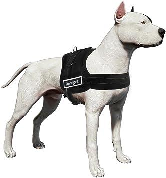LovinPet Arnés para perro, sin asfixia, reflectante, 3 m, sin ...