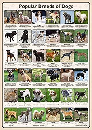 Tiger Moon The Tiger Moon Trading Company Ltd Popular Breeds of Dogs Poster (A1 Size 59.4 x 84.1 cm)
