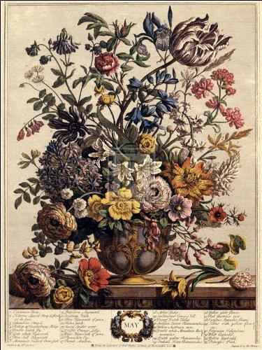 Robert Furber - Twelve Months of Flowers 1730/May (Flowers Of Months Twelve)