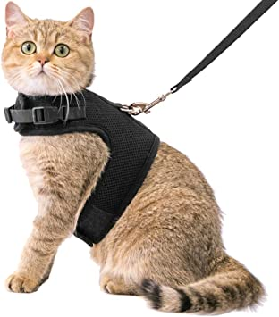 Amazon.com: Arnés y correa para gato Cherpet – chamarra de ...