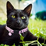 BoomBone Skull Cat Collar Breakaway with