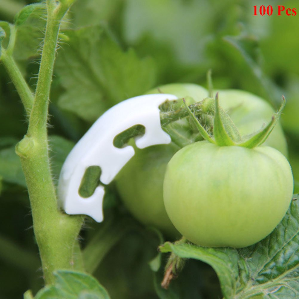 Exttlliy 100pcs Plant Support Garden Fixing Clips White for Tomato Stem to Grow Upright Healthier