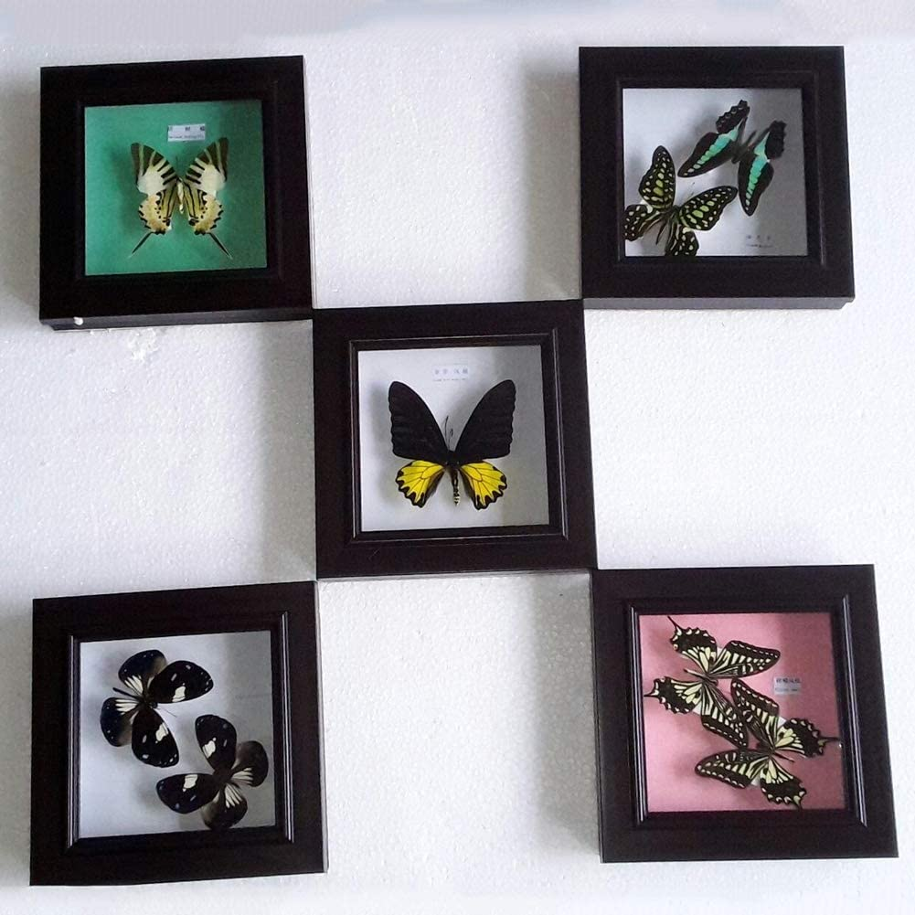 XIEJI Real Butterfly Specimen Framed Biological insect specimen,08