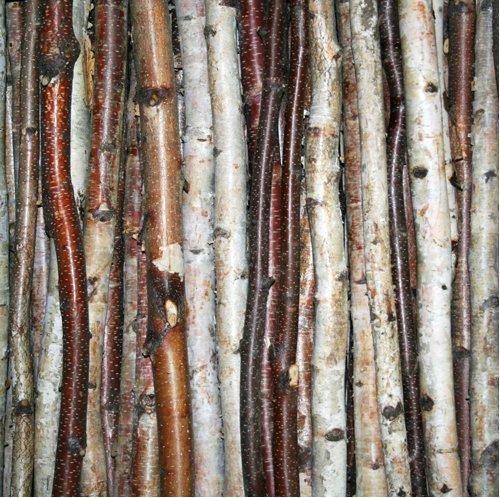 - Wilson Enterprises Birch Stick Packs (Roped 3 Pack (48 inch Long x .5-1 inch Diameter))