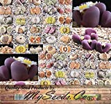 LITHOPS OPTICA Species Mix Seeds - Cactus Mix - House Plants cactus cacti succulent For Greenhouse and Outdoor - Living Rocks Stones - Quality Non-GMO Seeds By MS.CO (1 Packet)