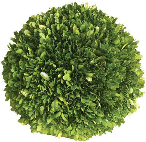 Mills Floral Company Boxwood Ball 6""