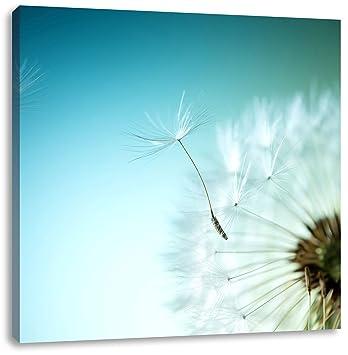 Wunderschöne Pusteblume  Leinwandbild Wanddeko Kunstdruck