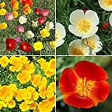 Search : David's Garden Seeds Flower Poppy California Dreaming Mix SL11VF (Multi) 500 Open Pollinated Seeds