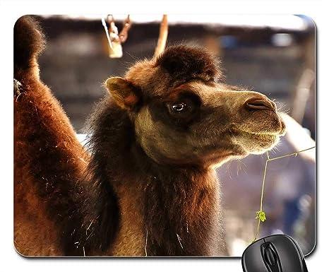 Amazon.com: Mouse Pad - Camel Zoo Animal Nature Mammal Hump ...