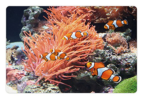 Fish Pet Mats for Food and Water by Lunarable, Striped Sea Anemone Clown Fishes near a Rock Algae at Depth Pacific Animals Image, Rectangle Non-Slip Rubber Mat for Dogs and Cats, Orange Grey (Anemone Rug)