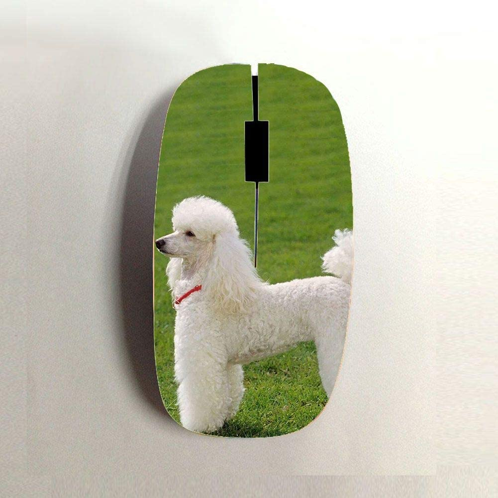 Babu Building Use for Bluetooth Mouse Have Poodle 1 Child Plastic Slim