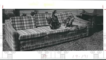 Swell Amazon Com Vintage Photos 1985 Press Photo Dogs On Sofa At Machost Co Dining Chair Design Ideas Machostcouk