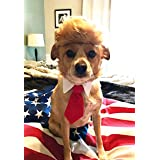 Trump Style Pet Costume Dog Wig, Donald Dog Clothes with Collar & Tie Head Wear Apparel Toy for Halloween, Christmas, parties
