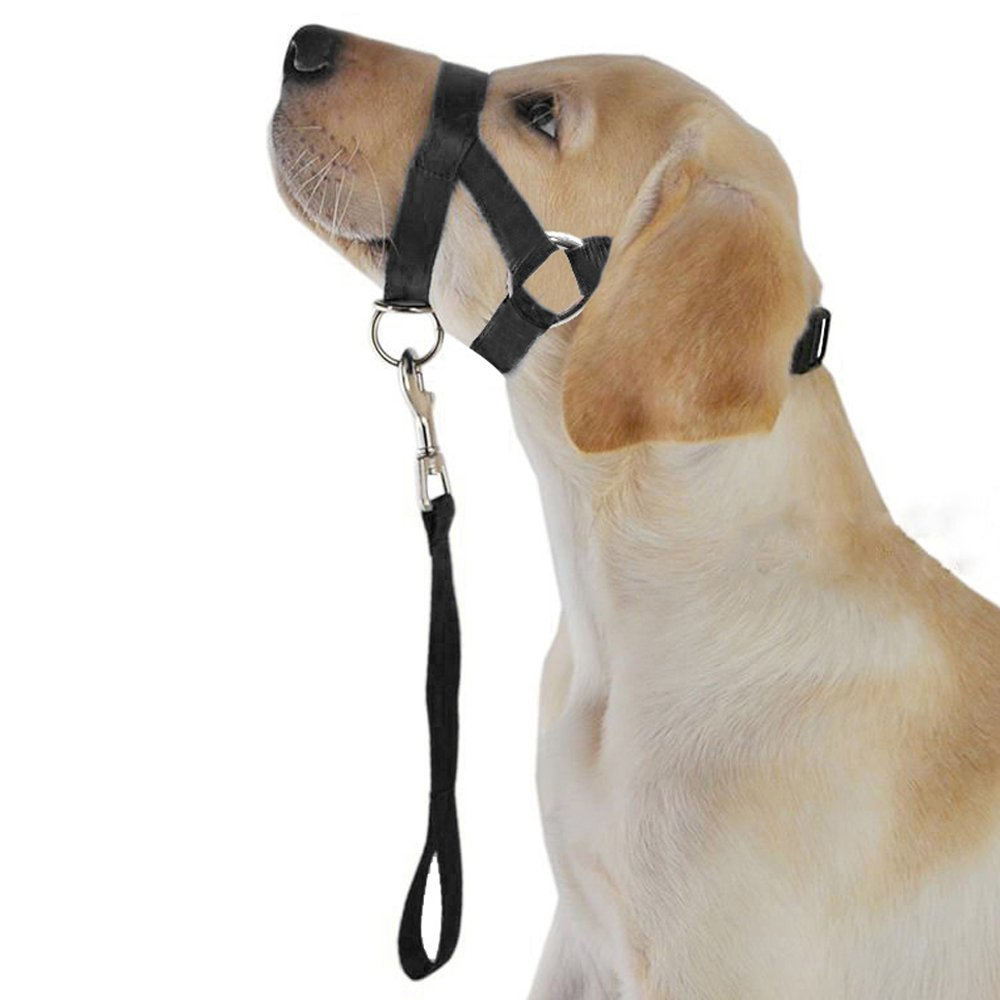 Black XL Black XL Didog Upgraded Version No Pull Nylon Dog Head Collar with a Short Leash XL Size Perfect for Training Controlling