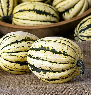 Jester Striped Acorn Winter Squash - 20 Seeds