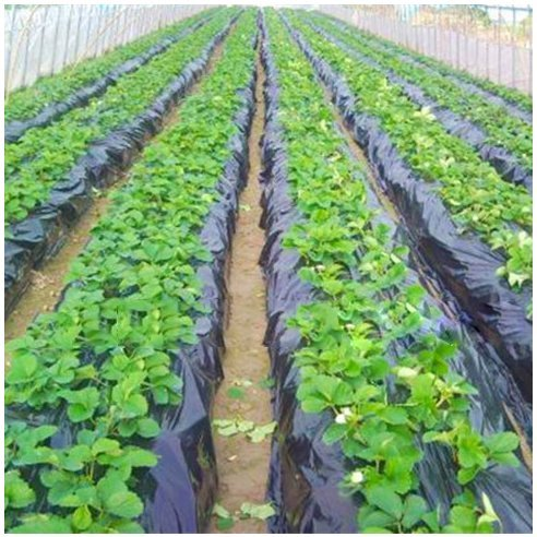 agfabric-landscape-garden-film-embossed-plastic-mulch-strawberry-tomato-potato-weed-barrier-polyethy