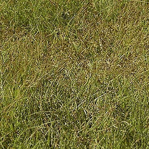 Everwilde Farms - 1 Lb Buffalo Grass Nat - Buffalo Grass Shopping Results