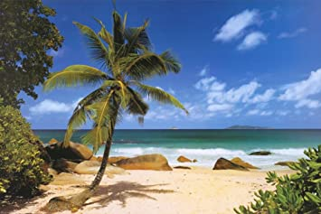 Palm Beach (Tropical Landscape Photo) Art Poster Print 36 X 24in