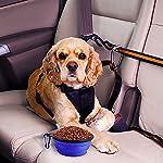 Sabuy Collapsible Dog Travel Bowl 12