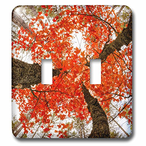 nt - Trees - Skyward view of maple tree in pine forest, Upper Peninsula, Michigan - Light Switch Covers - double toggle switch (lsp_259468_2) ()