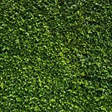 10x10 ft Nature Green Leaves Backdrops Photography Wedding or Children Birthday Background