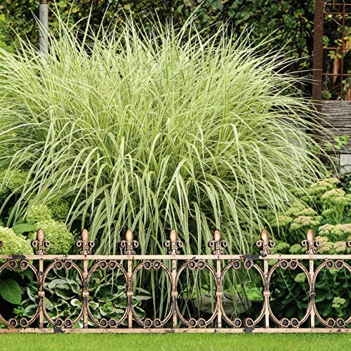 Relaxdays Set de Seis Vallas Decorativas para jardín, Vintage, Altura de 24 cm, Cobre: Amazon.es: Jardín