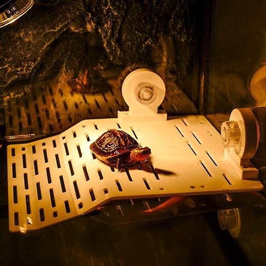 Hihey Tortoise Terraza Tortuga Plataforma Flotante Reptil Decorativo Rana Muelle Plataforma Flotante Escalera de rampa (Tamaño: 23 * 17.3 * 3 cm): Amazon.es: Hogar