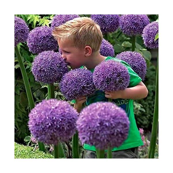 Ncient 10/20/50/100 Semi Sementi di Allium Giganteum Semi di Fiori Rari Piante Profumati per Orto Giardino Balcone… 4 spesavip
