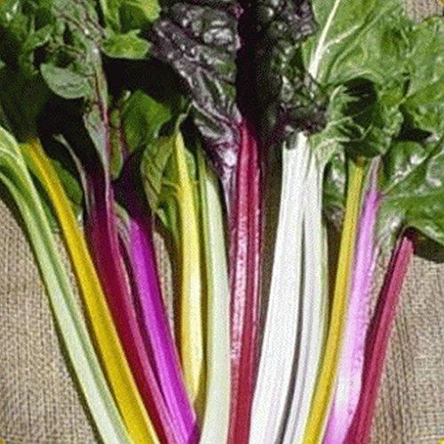 1 Ounce Swiss (Everwilde Farms - 1 Oz Organic Rainbow Swiss Chard Seeds - Gold Vault Packet)
