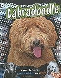 Labradoodle, Kathy Allen, 1429676663