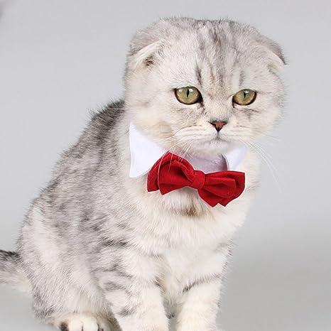 WINNERUS 1 unid boda pajarita color rojo gatos mascotas perros collar mascota pajarita encantadora fotografía de