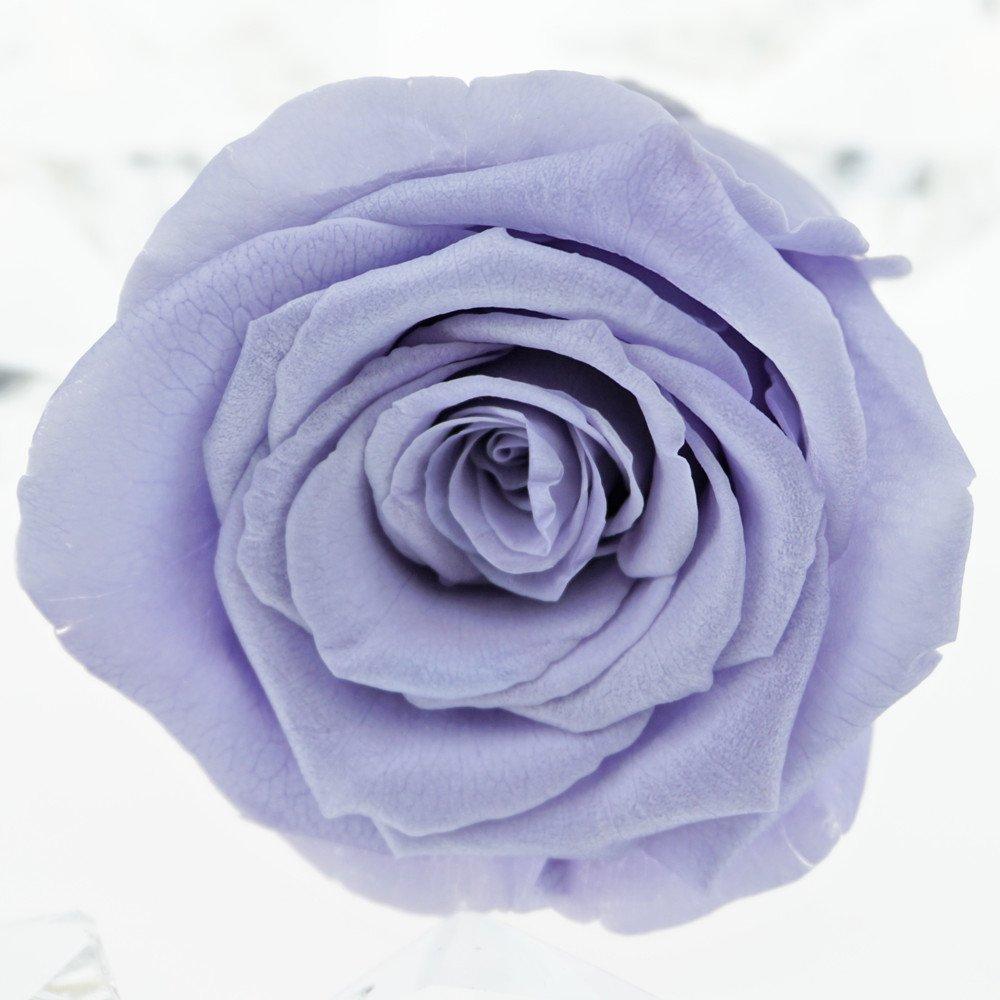 f1d64ef24505 Amazon.com  INVISIKAYAK Preserved Fresh Flower Roses Flower Head,2-2.4inch  Each,6pc (Light Purple)  Kitchen   Dining