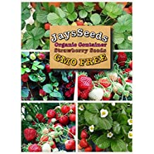 Organic Container Everbearing Strawberry 200 Seeds Upc 648620998026 Delicious High Yielding + 1 Plant Marker