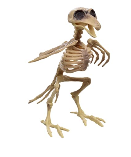 Amazon.com: Bird Skeleton Halloween Decor Prop 7: Kitchen & Dining