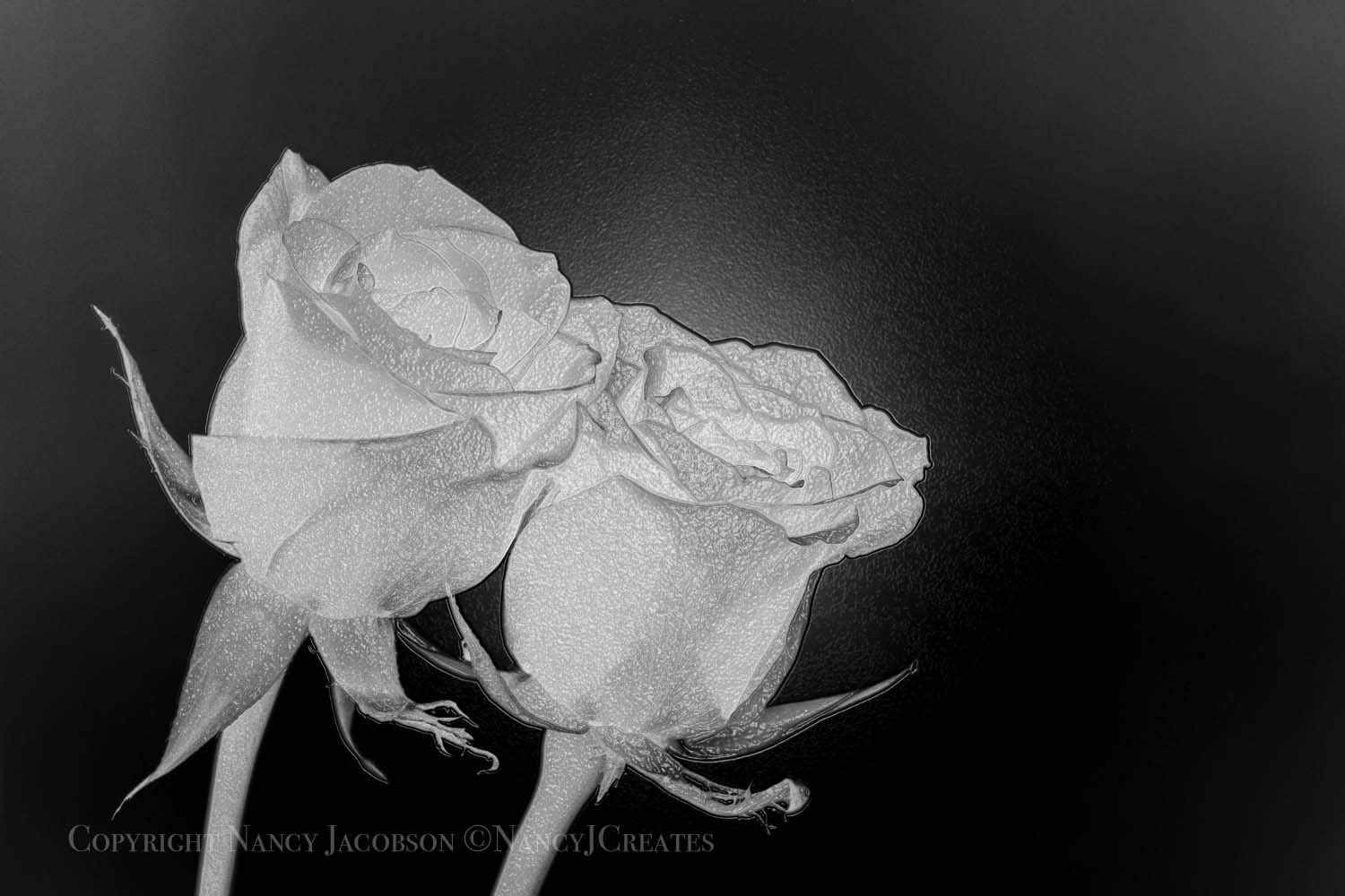 ebdf05c8a Two Roses Romantic Gift for Spouse Partner Wife Husband Unframed Rose Art  Floral Photography Digital Painting Flower Print Botanical Home Decor Grey  5x7 ...