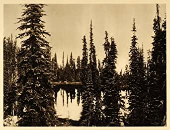 1926 Marion Lake Pine Fir Trees British Columbia Canada - Original Photogravure