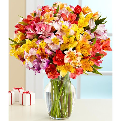 100 Blooms Of Peruvian Lilies  With Free Glass Vase    Flowers