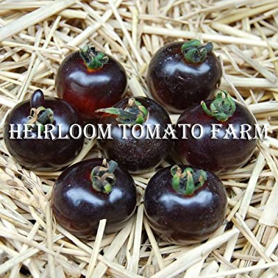 世界初の高アントシアニントマト。『ブルートマト聖鳳コレクション』Blue Tomato Indigo Rose ブルートマト・インディゴ・ローズ・種子10粒