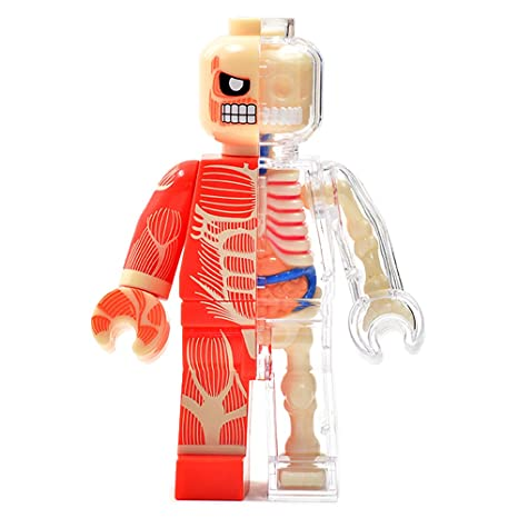 Amazon 4d Vision Body Anatomy Muscel Man Funny Anatomy By