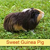 Sweet Guinea Pig 2020: Rodents and Pets (Calvendo Animals)