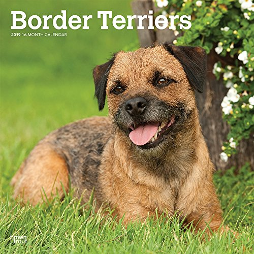 Border Terriers 2019 12 x 12 Inch Monthly Square Wall Calendar, Animals Dog Breeds Terriers