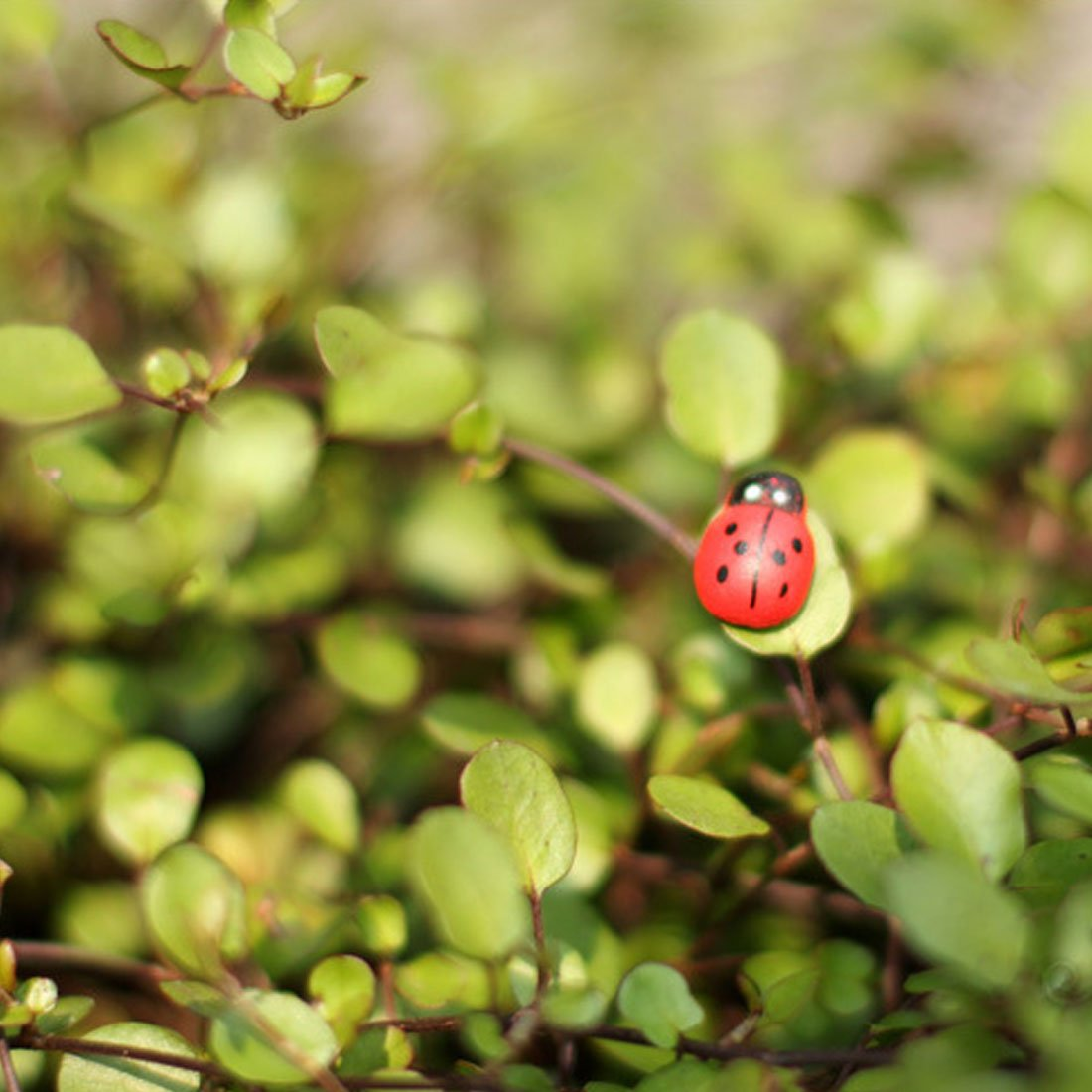 Amazon.com : Mini Ladybugs, Self-Adhesive Ladybugs Wooden Ladybug ...