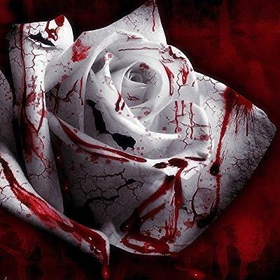 150 Seed Rarest White Blood Rose Plant Flower Seeds Flower Garden Asaka Rare True Blood Rose seed