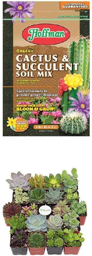 Hoffman 10404 Organic Cactus and Succulent Soil Mix, 4 Quarts WITH Shop Succulents Unique Succulent (Collection of 20)