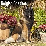 Belgian Shepherd Dog Calendar - Breed Specific Belgian Shepherd Dogs Calendar - 2016 Wall calendars - Dog Calendars - Monthly Wall Calendar by Avonside