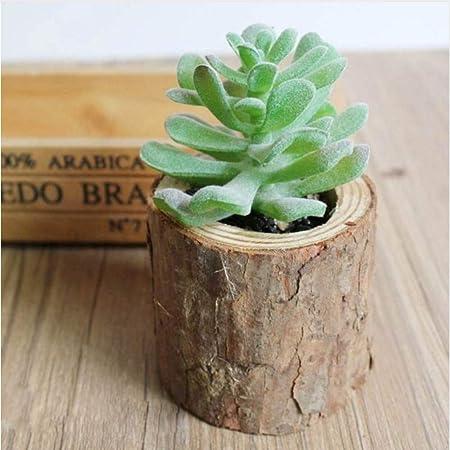 AnnBlue Plantas suculentas Artificiales Woody Planta en Maceta ...