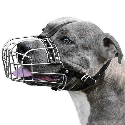 Amazon.com: BronzeDog - Bozal de metal para perro, diseño de ...